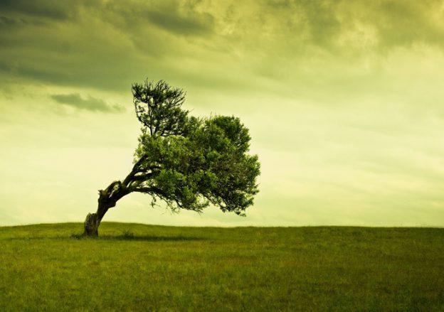 Un árbol solitario en medio de un prado está torcido hacia la derecha a causa de la fuerza del viento, hay nubes de tempestad y el suelo es de hierba muy verde